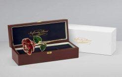 Black-Rose-Brown-White-Box-DSC03358