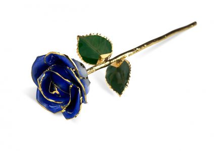 Dark blue Two Tone rose without Premium Display Case Gift Sets - Infinity Rose