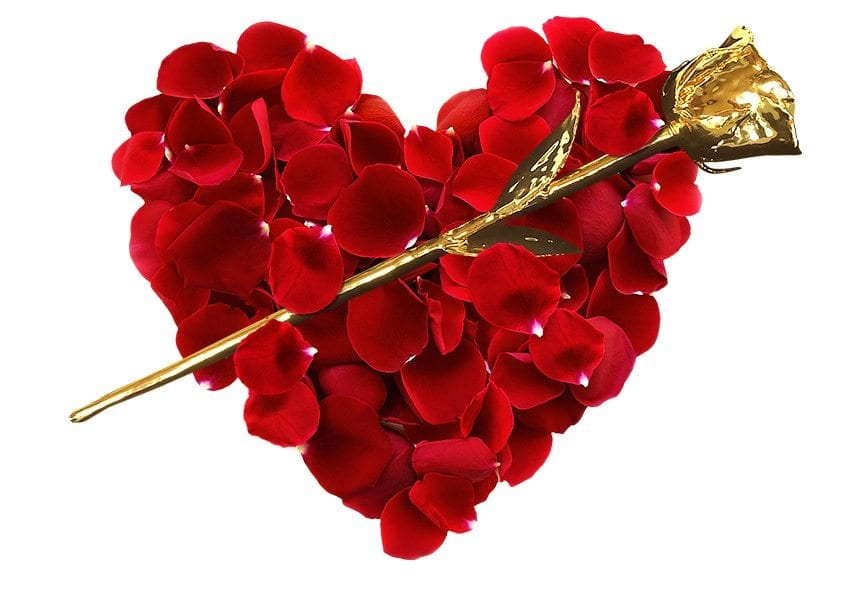 News on Roses for Valentines Day Solutions - Infinity Rose