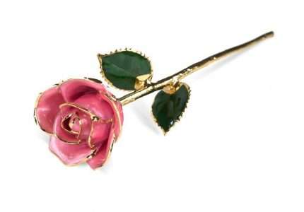 Pink Rose without Premium Display Case - Infinity Rose