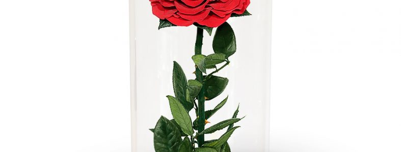 Red-Preserved-Rose-1a